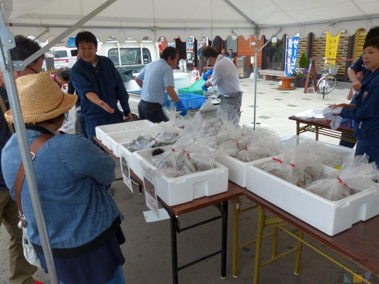 【魚の日】檜山のスルメイカが遂に来た!・木古内からはアブラコ祭り!