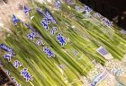 【知内町】開湯800年!北海道最古の温泉のウェットティッシュ登場