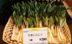 春の山菜の時期です!!